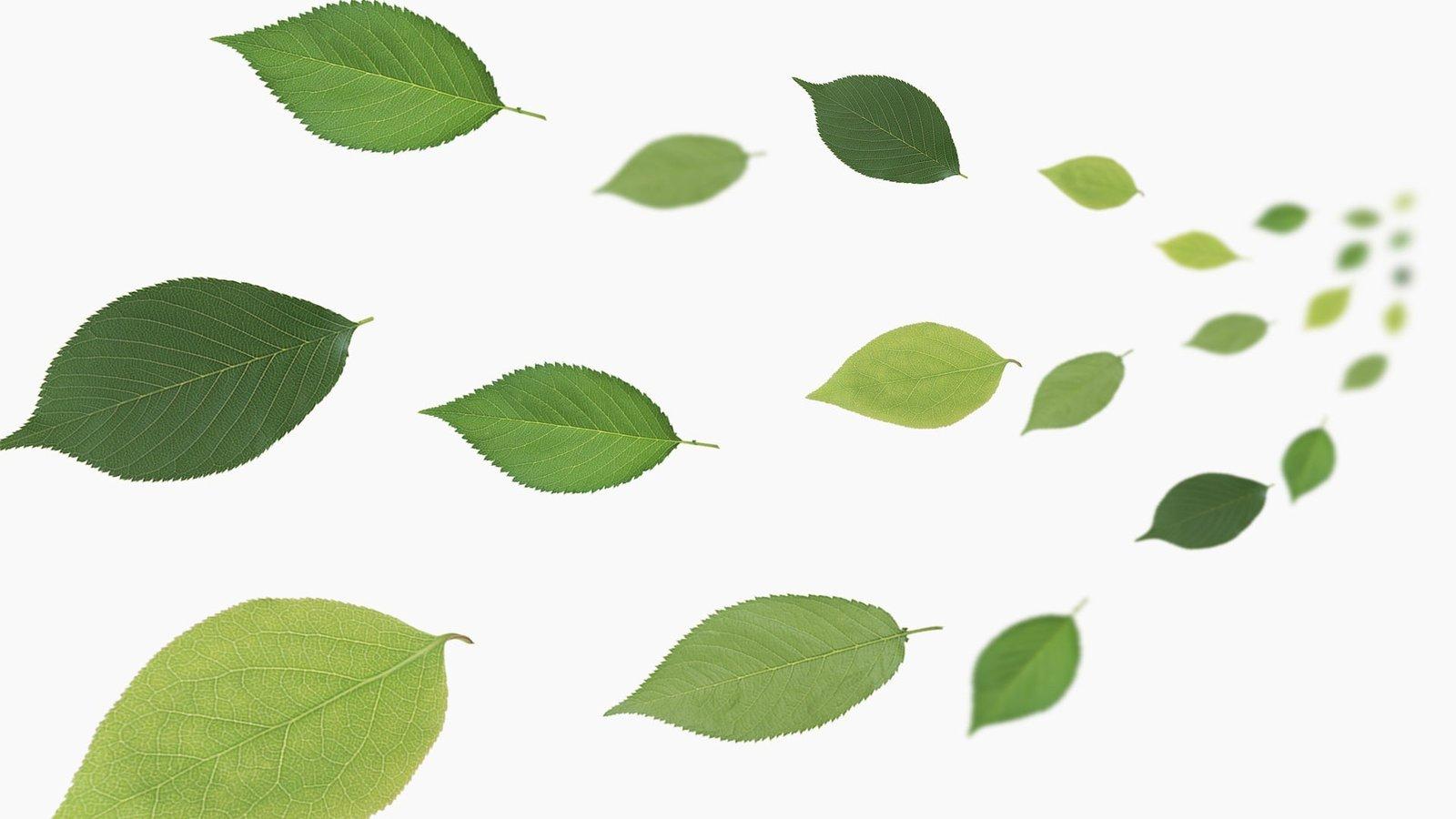 背景 壁纸 绿色 绿叶 设计 矢量 矢量图 树叶 素材 植物 桌面 1600图片